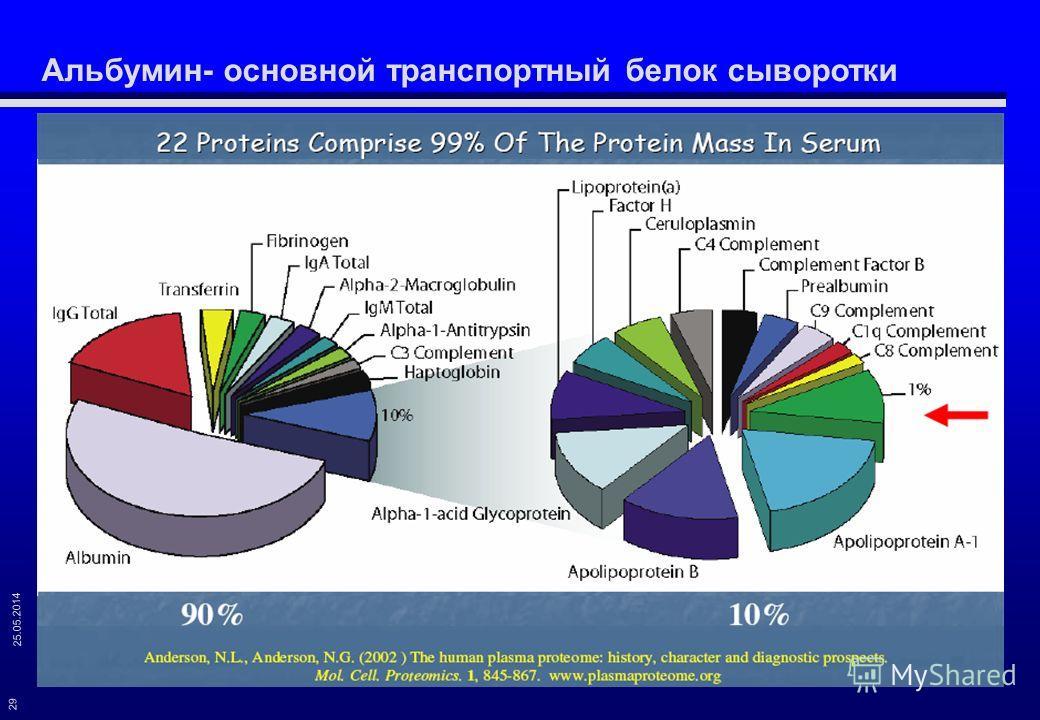 25.05.2014 29 Альбумин- основной транспортный белок сыворотки
