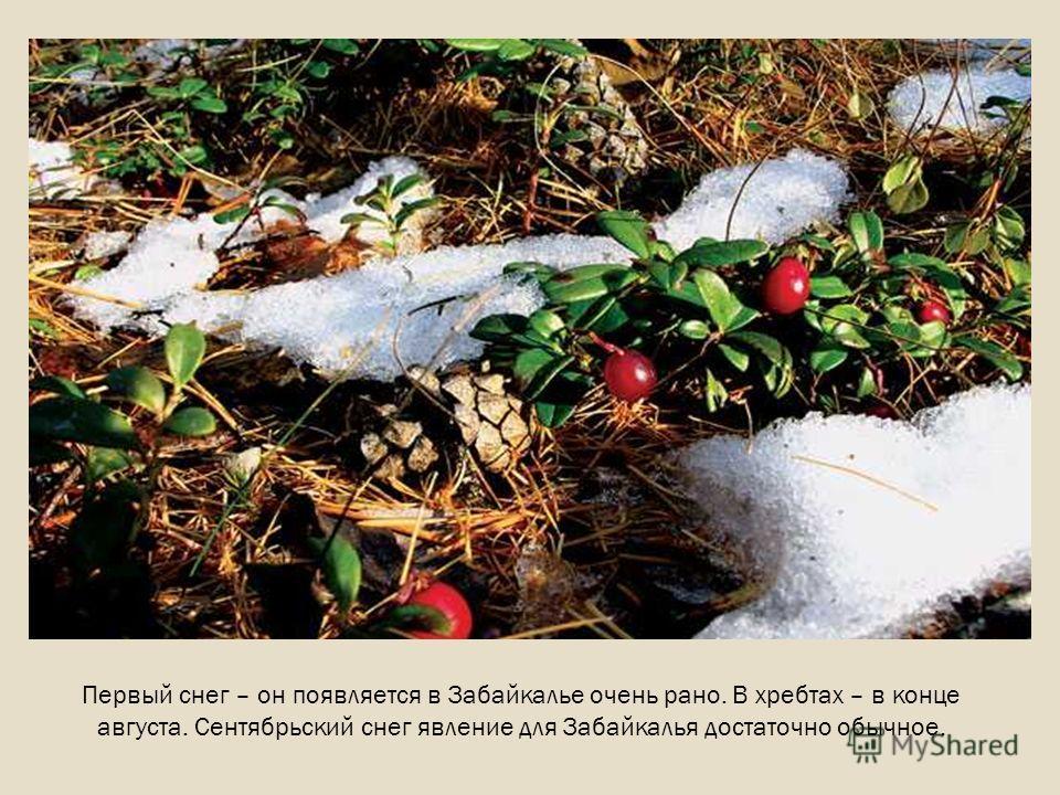 Первый снег – он появляется в Забайкалье очень рано. В хребтах – в конце августа. Сентябрьский снег явление для Забайкалья достаточно обычное.