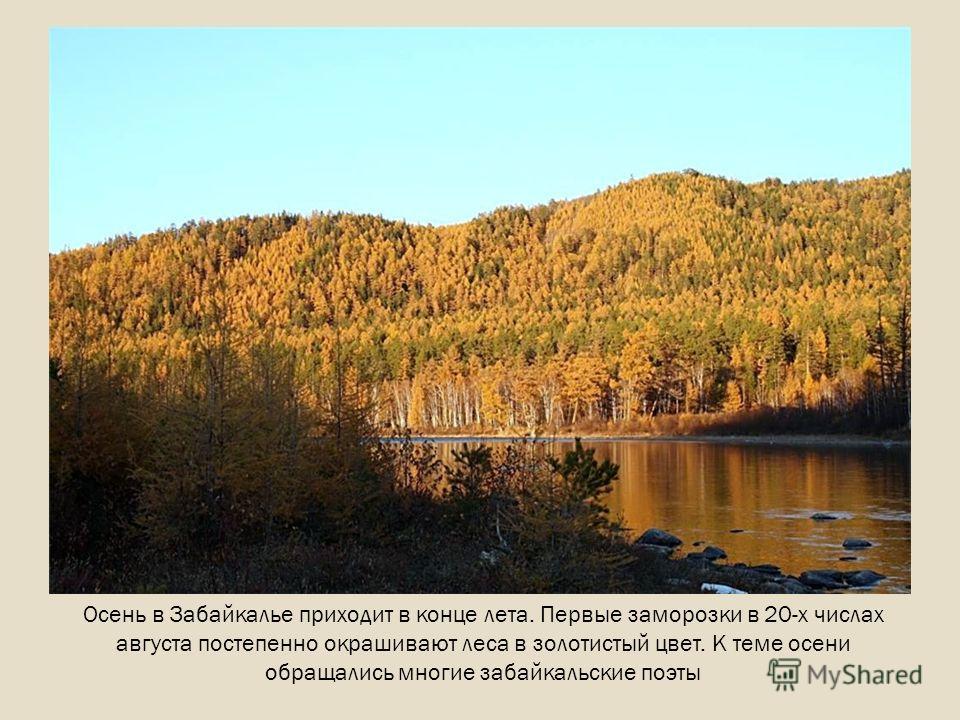 Осень в Забайкалье приходит в конце лета. Первые заморозки в 20-х числах августа постепенно окрашивают леса в золотистый цвет. К теме осени обращались многие забайкальские поэты