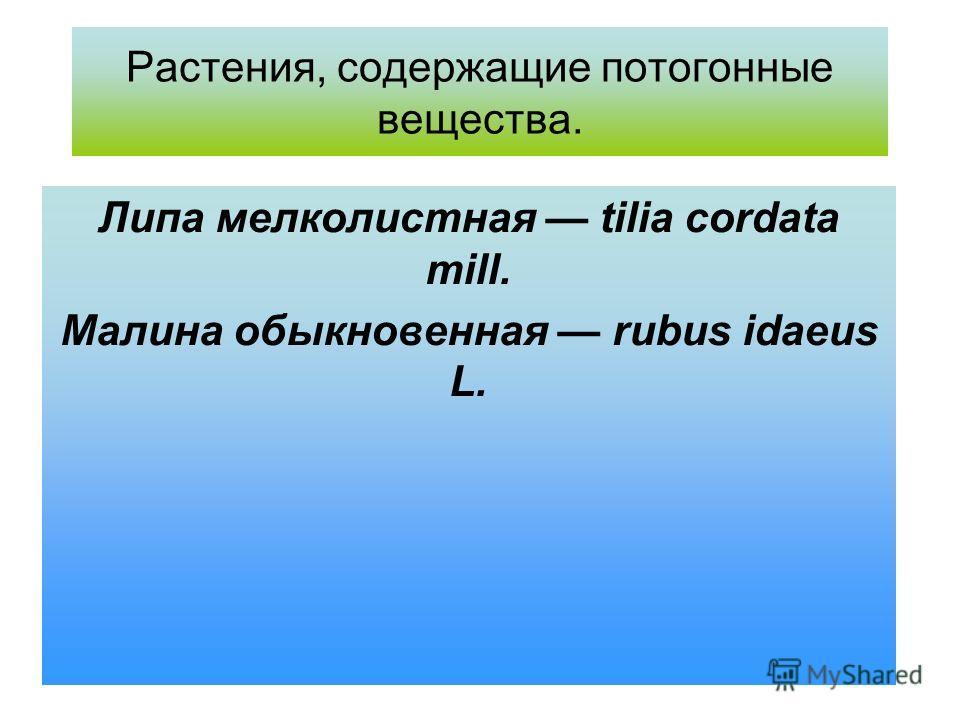 Растения, содержащие потогонные вещества. Липа мелколистная tilia cordata mill. Малина обыкновенная rubus idaeus L.