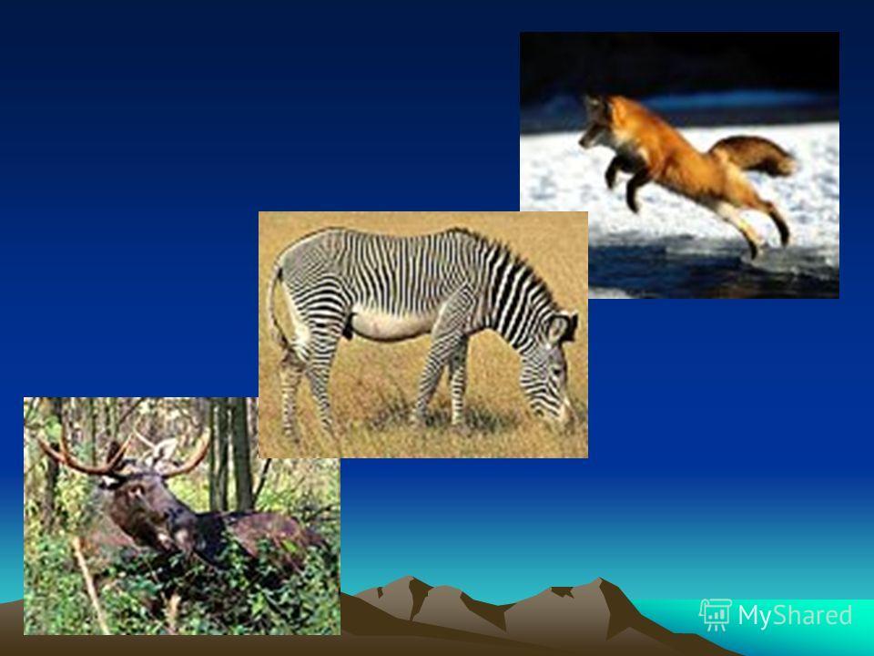 Игра «Третий лишний» Назовите, какое животное лишнее и почему?