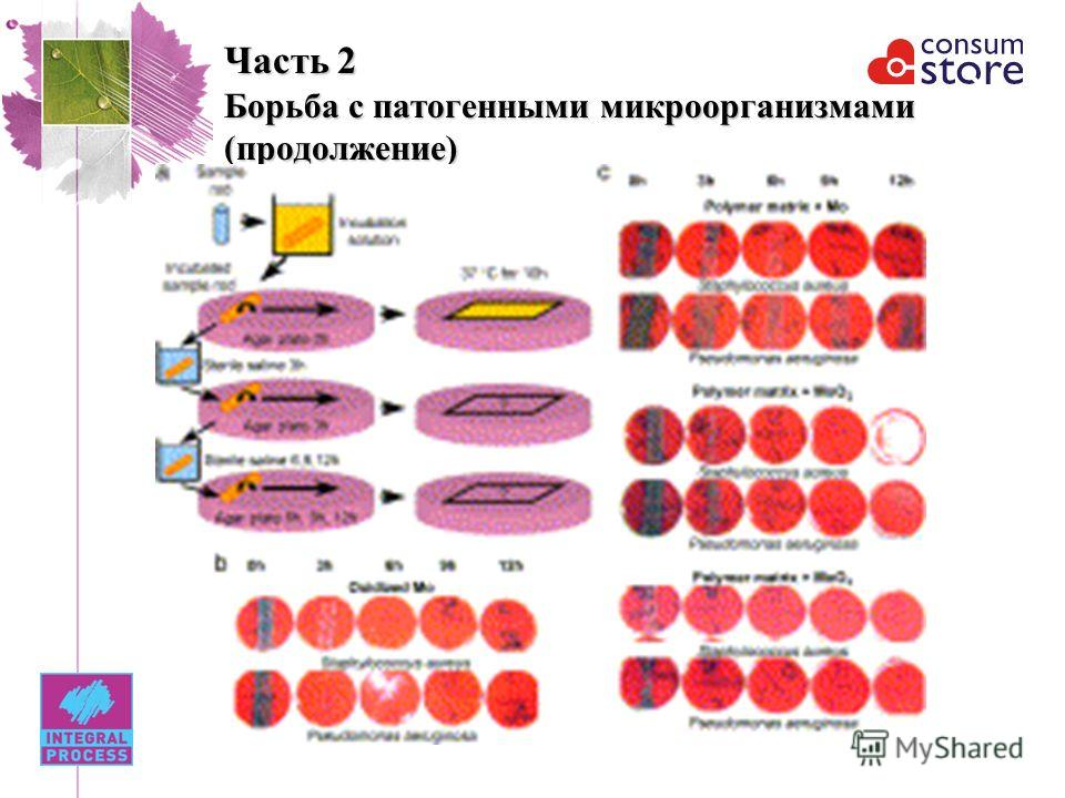 Часть 2 Борьба с патогенными микроорганизмами (продолжение)