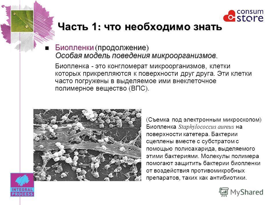 Часть 1 : что необходимо знать Биопленки ( продолжение ) Особая модель поведения микроорганизмов. Биопленки ( продолжение ) Особая модель поведения микроорганизмов. Биопленка - это конгломерат микроорганизмов, клетки которых прикрепляются к поверхнос