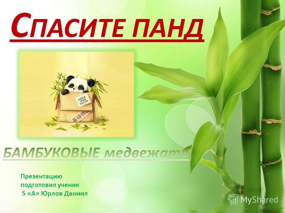 1 Презентацию подготовил ученик 5 «А» Юрлов Даниил С ПАСИТЕ ПАНД