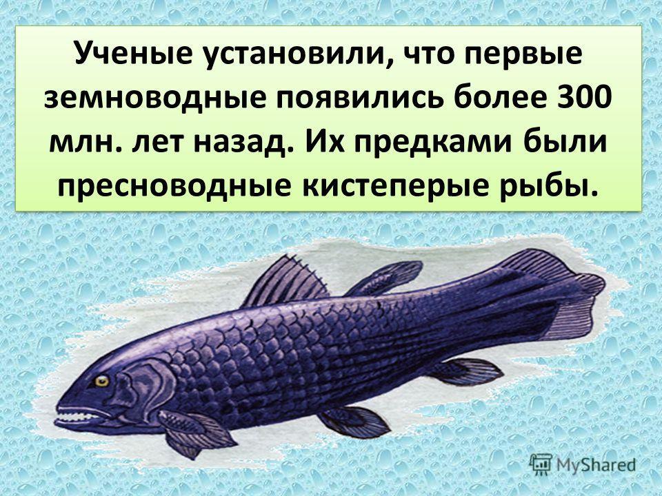 Ученые установили, что первые земноводные появились более 300 млн. лет назад. Их предками были пресноводные кистеперые рыбы.
