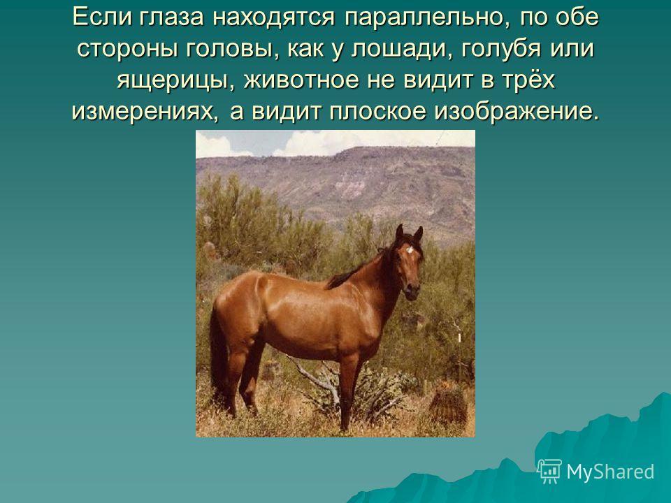 Если глаза находятся параллельно, по обе стороны головы, как у лошади, голубя или ящерицы, животное не видит в трёх измерениях, а видит плоское изображение.