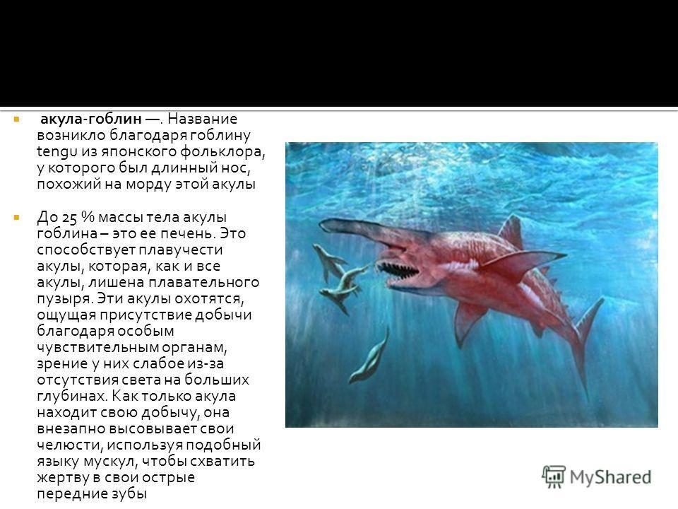 акула-гоблин. Название возникло благодаря гоблину tengu из японского фольклора, у которого был длинный нос, похожий на морду этой акулы До 25 % массы тела акулы гоблина – это ее печень. Это способствует плавучести акулы, которая, как и все акулы, лиш