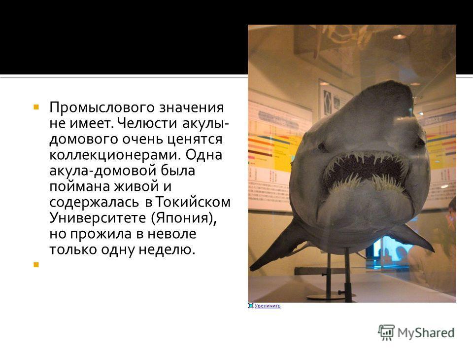 Промыслового значения не имеет. Челюсти акулы- домового очень ценятся коллекционерами. Одна акула-домовой была поймана живой и содержалась в Токийском Университете (Япония), но прожила в неволе только одну неделю.