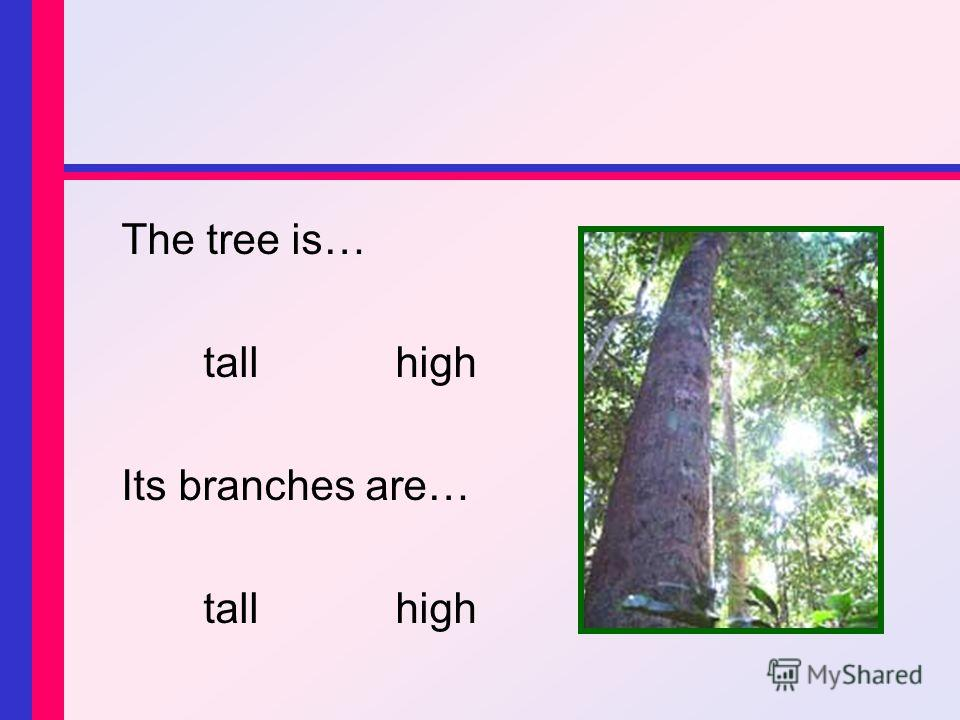 The tree is… tallhigh Its branches are… tallhigh