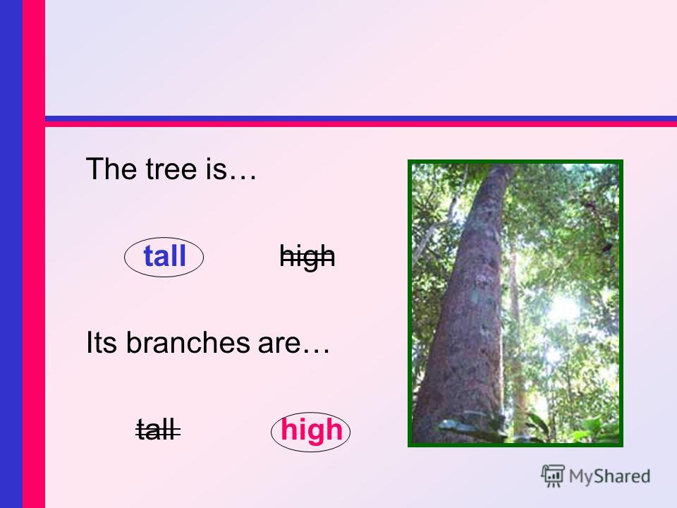 The tree is… tallhigh Its branches are… tall high