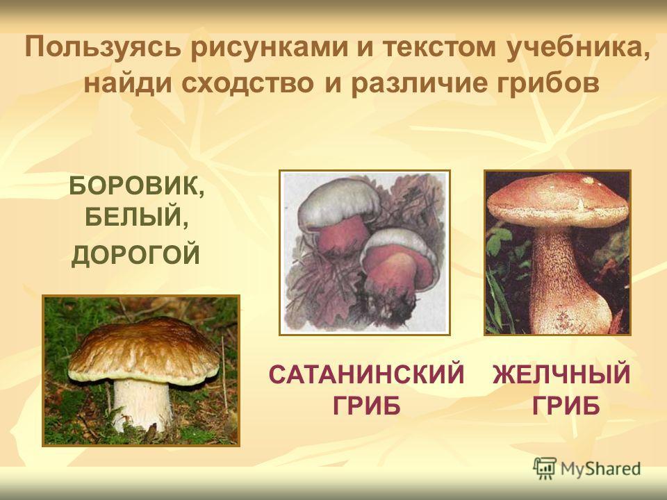 БОРОВИК, БЕЛЫЙ, ДОРОГОЙ САТАНИНСКИЙ ГРИБ ЖЕЛЧНЫЙ ГРИБ Пользуясь рисунками и текстом учебника, найди сходство и различие грибов