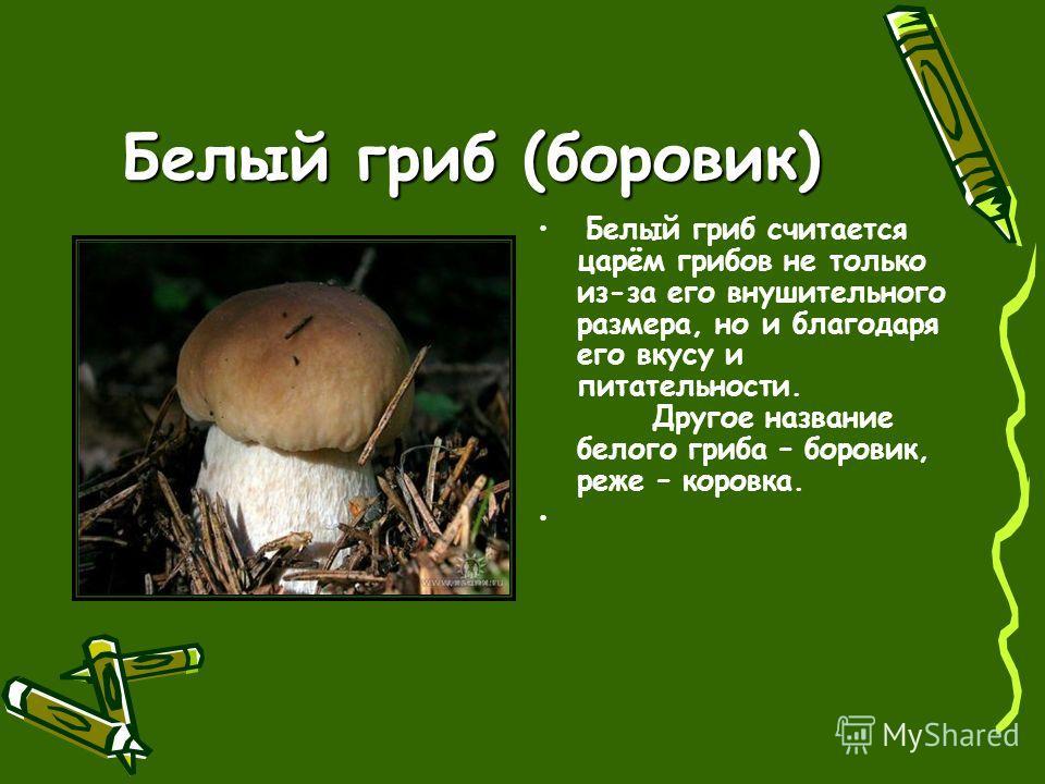 Белый гриб (боровик) Белый гриб считается царём грибов не только из-за его внушительного размера, но и благодаря его вкусу и питательности. Другое название белого гриба – боровик, реже – коровка.