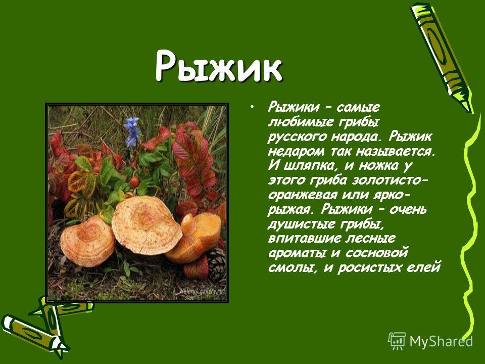 Рыжик Рыжики – самые любимые грибы русского народа. Рыжик недаром так называется. И шляпка, и ножка у этого гриба золотисто- оранжевая или ярко- рыжая. Рыжики – очень душистые грибы, впитавшие лесные ароматы и сосновой смолы, и росистых елей