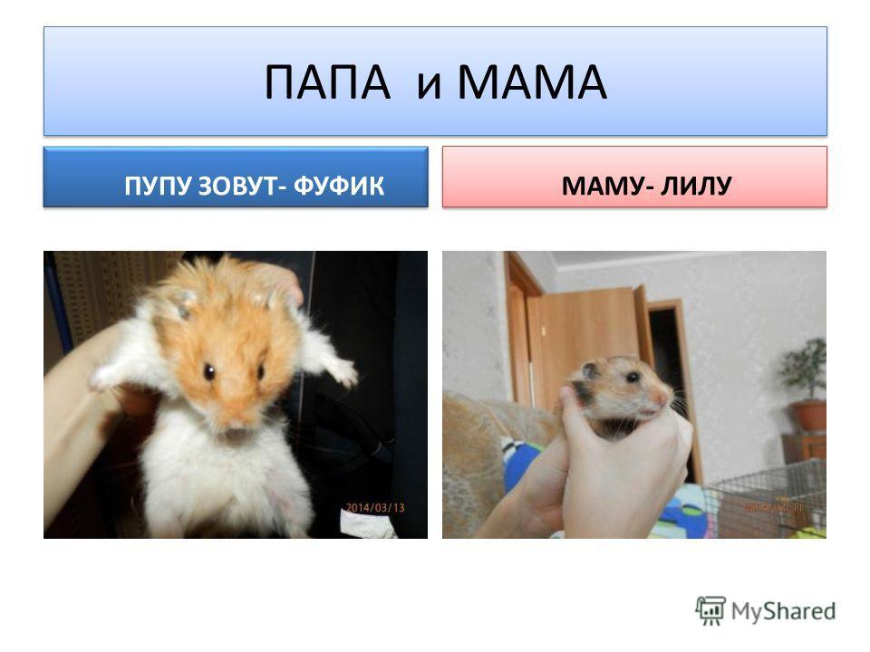 ПАПА и МАМА ПУПУ ЗОВУТ- ФУФИК МАМУ- ЛИЛУ