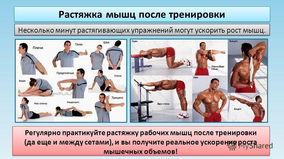 Растяжка мышц после тренировки Несколько минут растягивающих упражнений могут ускорить рост мышц. Регулярно практикуйте растяжку рабочих мышц после тренировки (да еще и между сетами), и вы получите реальное ускорение роста мышечных объемов! Регулярно