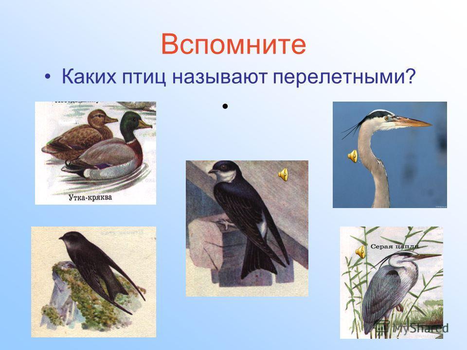 Вспомните Каких птиц называют перелетными?