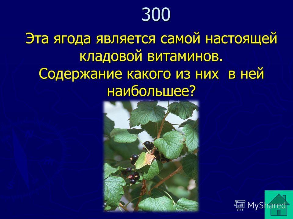 Эта ягода является самой настоящей кладовой витаминов. Содержание какого из них в ней наибольшее? 300