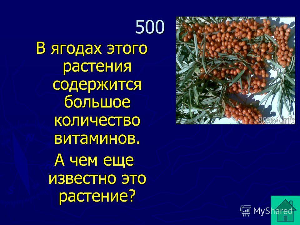 В ягодах этого растения содержится большое количество витаминов. А чем еще известно это растение? А чем еще известно это растение? 500