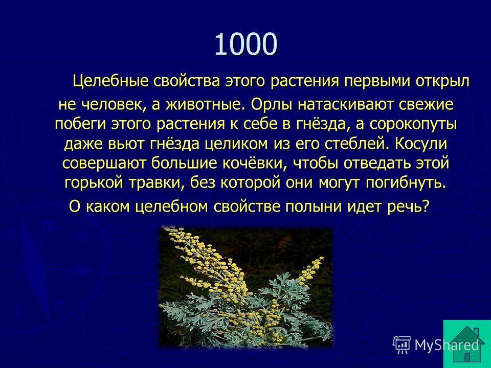 1000 Целебные свойства этого растения первыми открыл не человек, а животные. Орлы натаскивают свежие побеги этого растения к себе в гнёзда, а сорокопуты даже вьют гнёзда целиком из его стеблей. Косули совершают большие кочёвки, чтобы отведать этой го