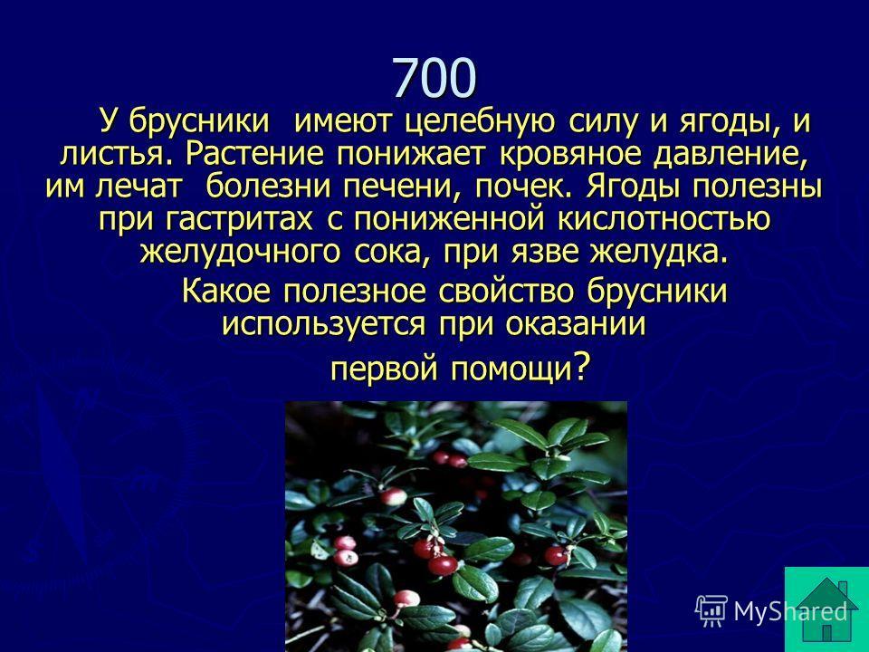У брусники имеют целебную силу и ягоды, и листья. Растение понижает кровяное давление, им лечат болезни печени, почек. Ягоды полезны при гастритах с пониженной кислотностью желудочного сока, при язве желудка. Какое полезное свойство брусники использу