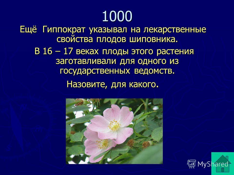 Ещё Гиппократ указывал на лекарственные свойства плодов шиповника. В 16 – 17 веках плоды этого растения заготавливали для одного из государственных ведомств. В 16 – 17 веках плоды этого растения заготавливали для одного из государственных ведомств. Н
