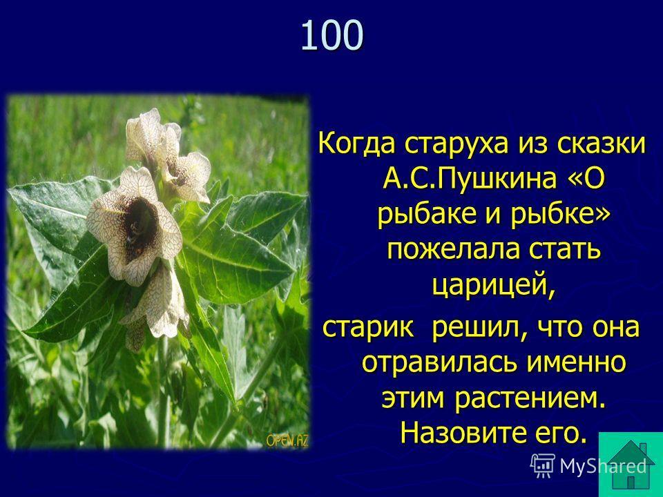Когда старуха из сказки А.С.Пушкина «О рыбаке и рыбке» пожелала стать царицей, старик решил, что она отравилась именно этим растением. Назовите его. 100