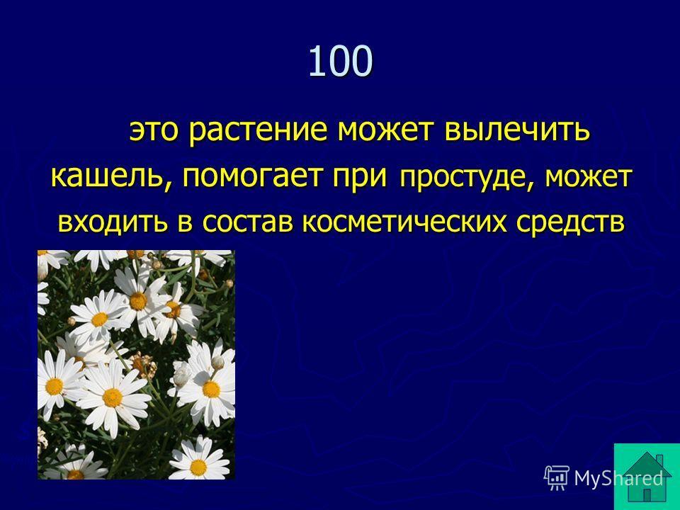 100 это растение может вылечить кашель, помогает при простуде, может входить в состав косметических средств это растение может вылечить кашель, помогает при простуде, может входить в состав косметических средств