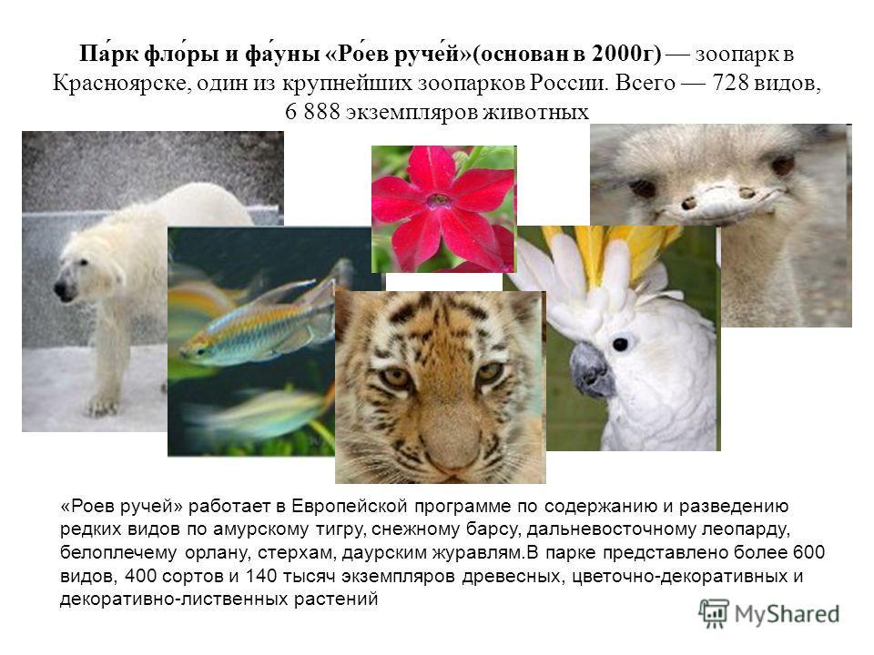 Па́рк фло́ры и фа́уны «Ро́ев руче́й»(основан в 2000г) зоопарк в Красноярске, один из крупнейших зоопарков России. Всего 728 видов, 6 888 экземпляров животных «Роев ручей» работает в Европейской программе по содержанию и разведению редких видов по аму