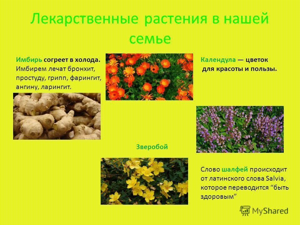 ЯДОВИТЫЕ РАСТЕНИЯ Наряду с травами лекарственными, полезными для здоровья, в природе встречаются ядовитые растения, обладающие ядовитыми свойствами