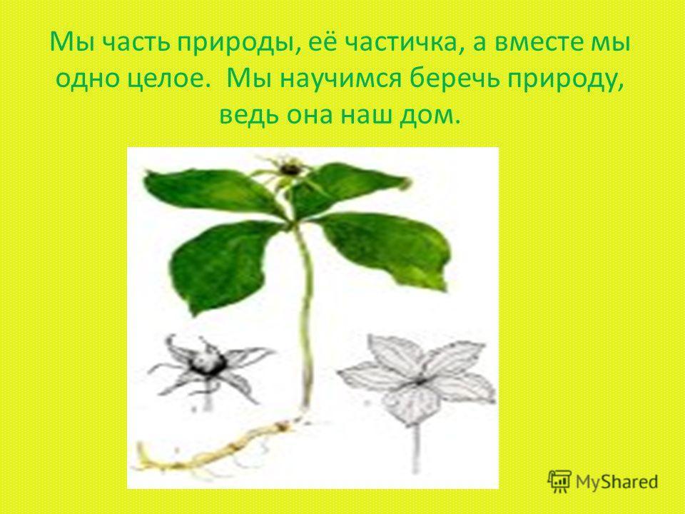 Рефлексия деятельности Для сохранения знаний о растениях необходимо: Изучение лекарственных растений в школе Создавать кружки по изучению окружающей среды Применять опыт использования лекарственных растений