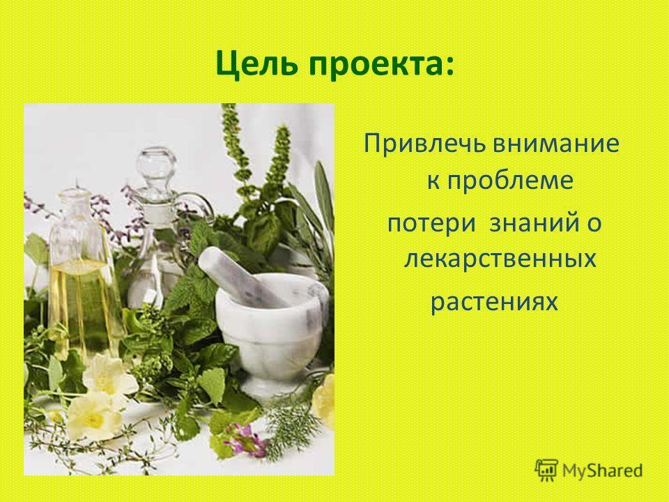Могут ли обычные растения ближайшего окружения помочь здоровью человека