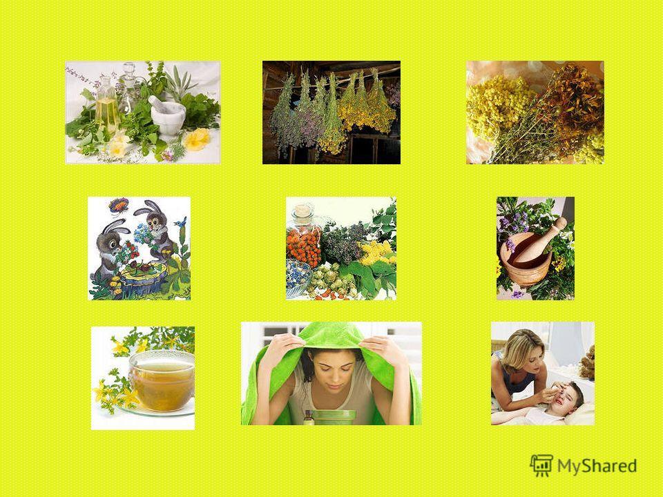 ЦЕЛЕБНЫЕ СВОЙСТВА РАСТЕНИЙ Целебными свойствами обладают не только растения лугов, садов, огородов, но и многие комнатные растения.