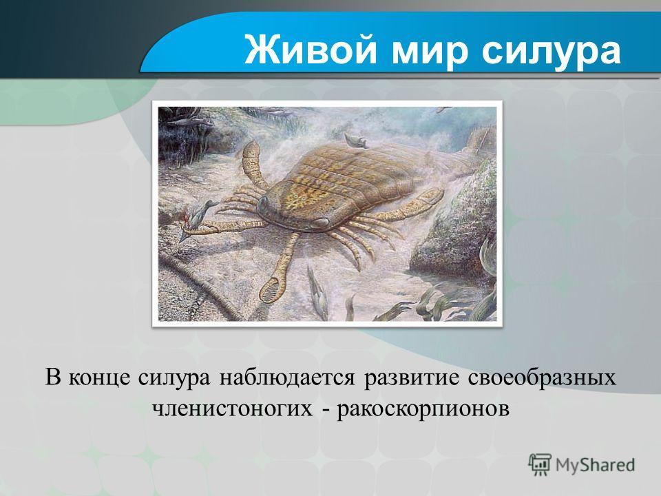 В конце силура наблюдается развитие своеобразных членистоногих - ракоскорпионов Живой мир силура
