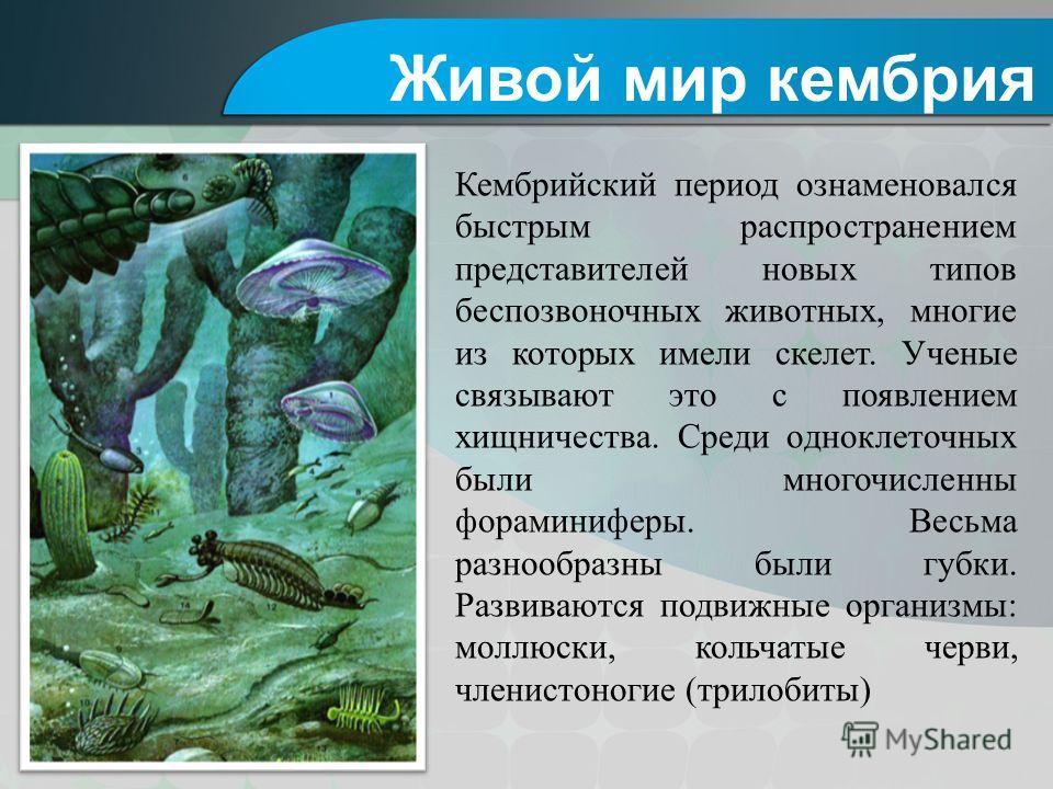 Кембрийский период ознаменовался быстрым распространением представителей новых типов беспозвоночных животных, многие из которых имели скелет. Ученые связывают это с появлением хищничества. Среди одноклеточных были многочисленны фораминиферы. Весьма р