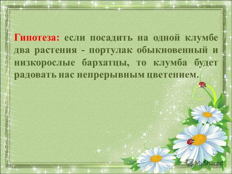 Гипотеза: если посадить на одной клумбе два растения - портулак обыкновенный и низкорослые бархатцы, то клумба будет радовать нас непрерывным цветением.