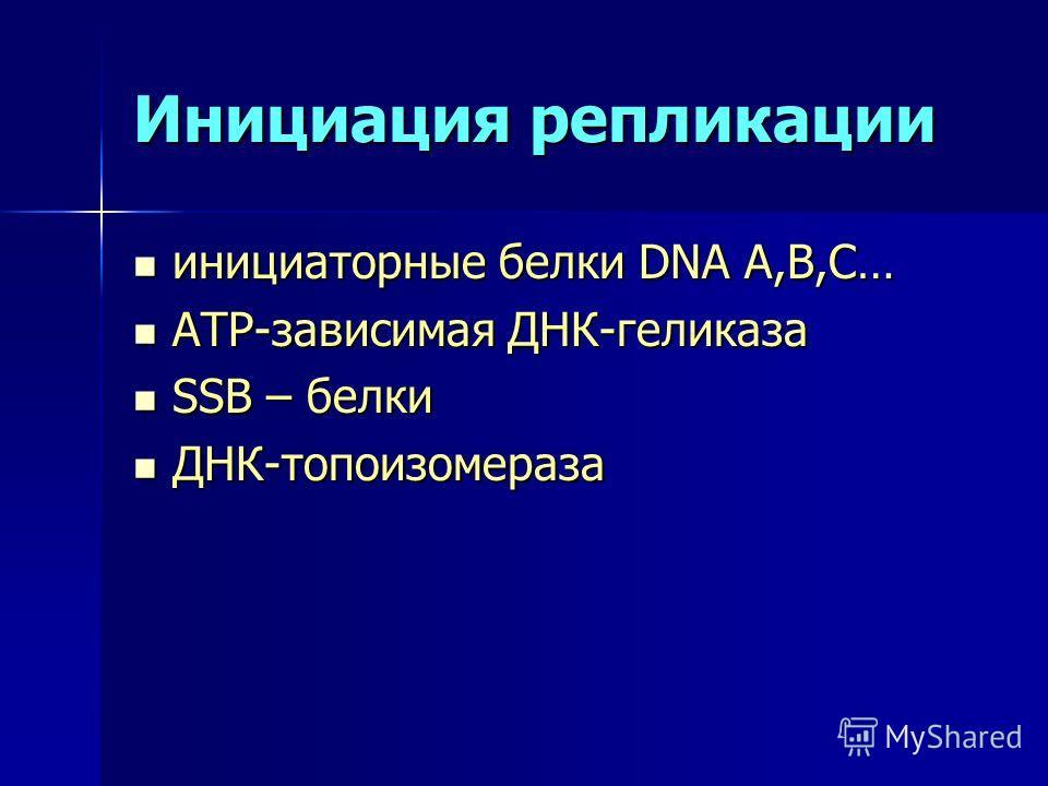 Инициация репликации инициаторные белки DNA A,В,С… инициаторные белки DNA A,В,С… АТР-зависимая ДНК-геликаза АТР-зависимая ДНК-геликаза SSB – белки SSB – белки ДНК-топоизомераза ДНК-топоизомераза