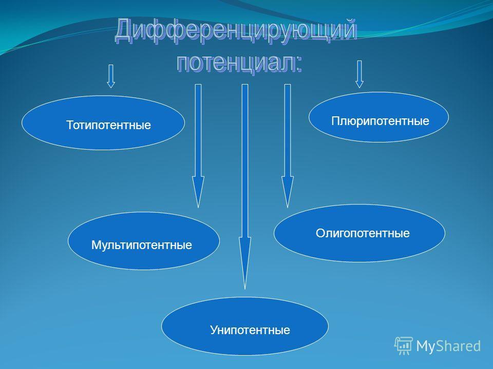 Тотипотентные Плюрипотентные Мультипотентные Олигопотентные Унипотентные
