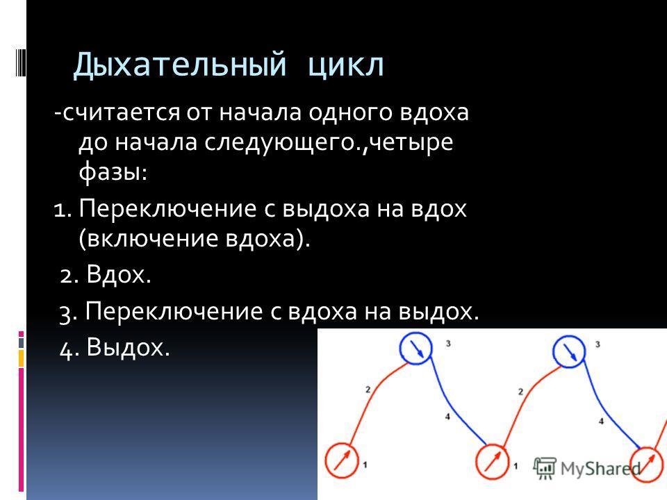 Дыхательный цикл -считается от начала одного вдоха до начала следующего.,четыре фазы: 1. Переключение с выдоха на вдох (включение вдоха). 2. Вдох. 3. Переключение с вдоха на выдох. 4. Выдох.