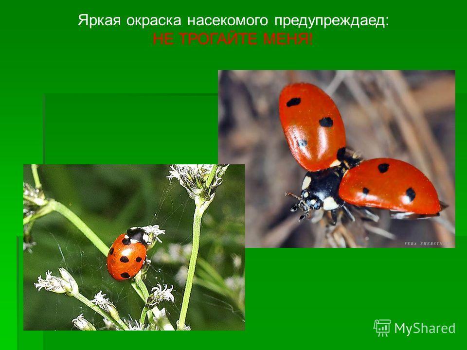 Яркая окраска насекомого предупреждаед: НЕ ТРОГАЙТЕ МЕНЯ!