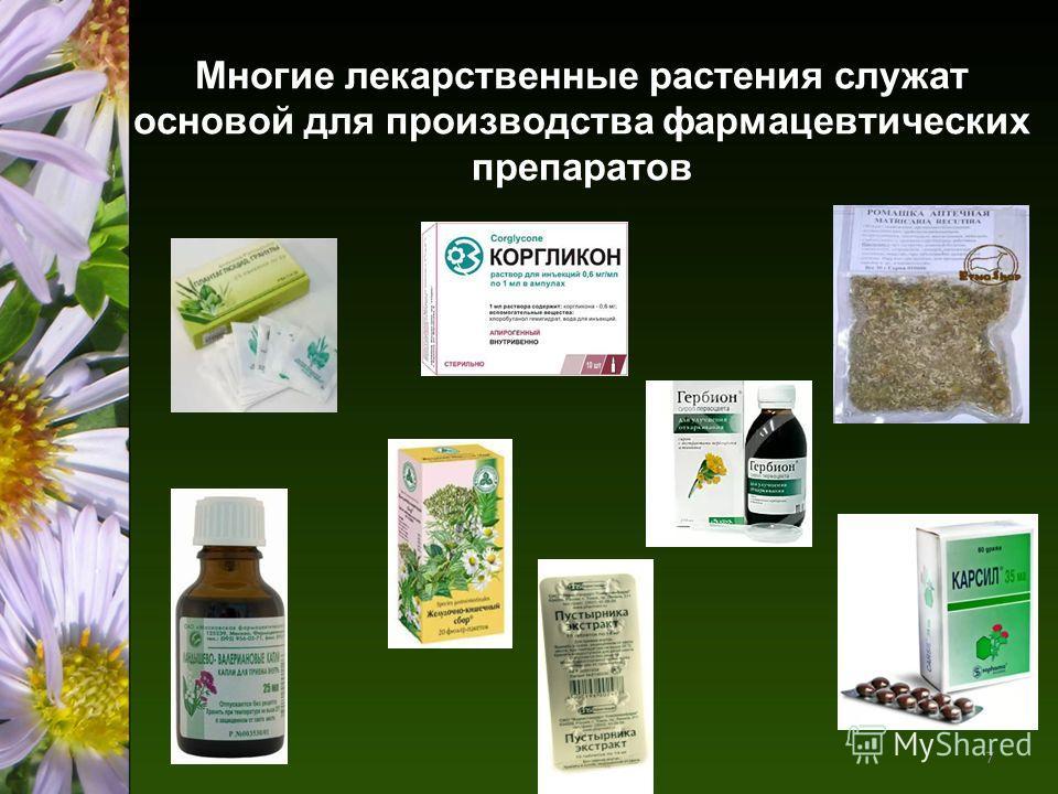 Многие лекарственные растения служат основой для производства фармацевтических препаратов 7