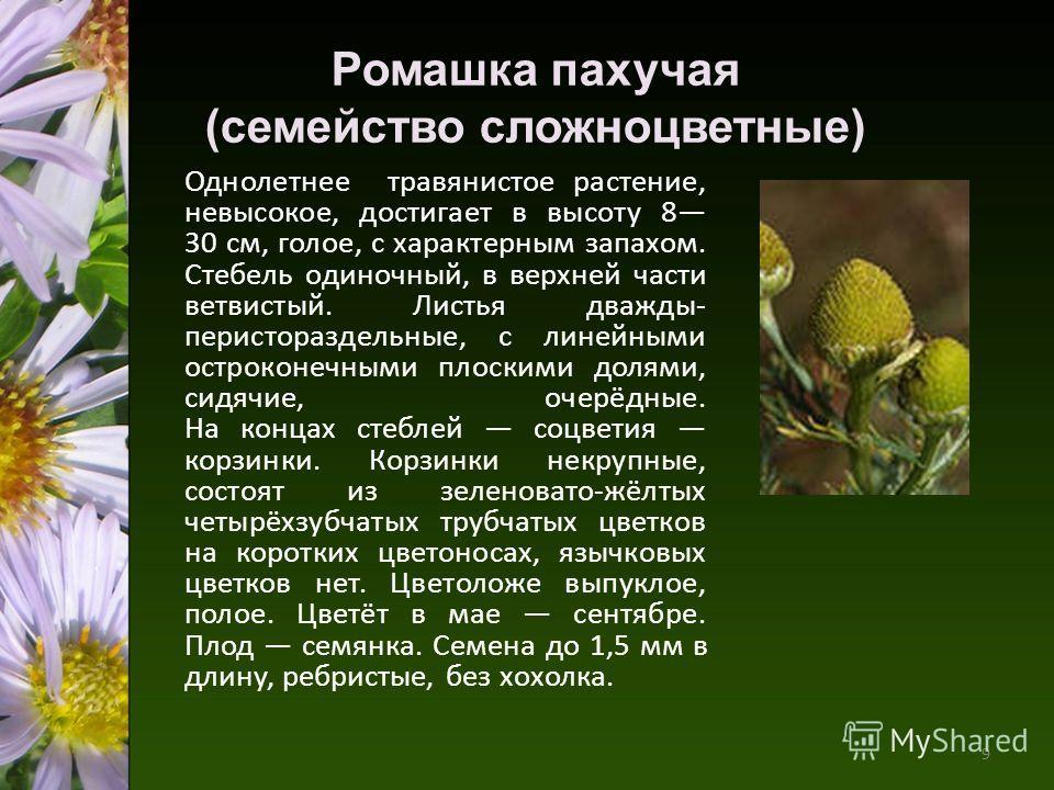 Однолетнее травянистое растение, невысокое, достигает в высоту 8 30 см, голое, с характерным запахом. Стебель одиночный, в верхней части ветвистый. Листья дважды- перистораздельные, с линейными остроконечными плоскими долями, сидячие, очерёдные. На к