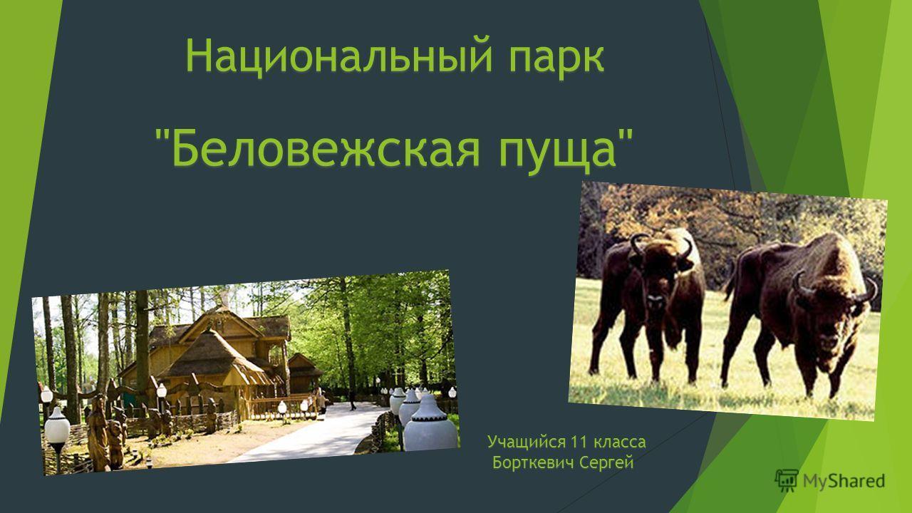 Национальный парк Беловежская пуща Учащийся 11 класса Борткевич Сергей Борткевич Сергей