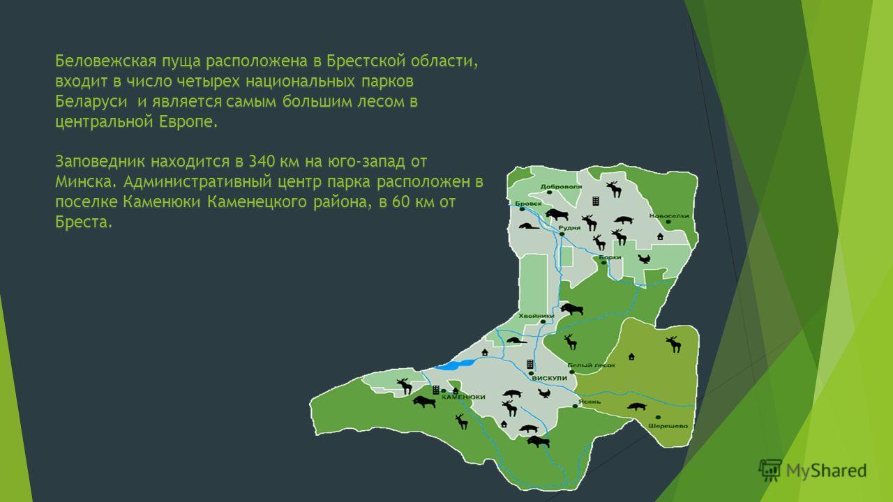 Беловежская пуща расположена в Брестской области, входит в число четырех национальных парков Беларуси и является самым большим лесом в центральной Европе. Заповедник находится в 340 км на юго-запад от Минска. Административный центр парка расположен в