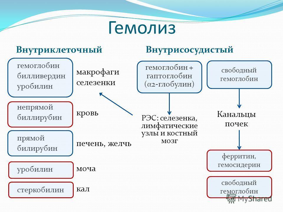 Гемолиз Внутриклеточный гемоглобин билливердин уробилин непрямой биллирубин прямой билирубин уробилин стеркобилин макрофаги селезенки кровь печень, желчь моча кал Внутрисосудистый гемоглобин + гаптоглобин (α2-глобулин) свободный гемоглобин ферритин,