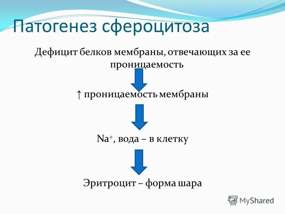 Патогенез сфероцитоза Дефицит белков мембраны, отвечающих за ее проницаемость проницаемость мембраны Na +, вода – в клетку Эритроцит – форма шара