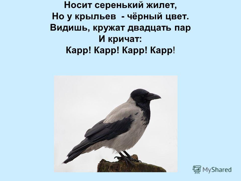 Носит серенький жилет, Но у крыльев - чёрный цвет. Видишь, кружат двадцать пар И кричат: Карр! Карр! Карр! Карр!