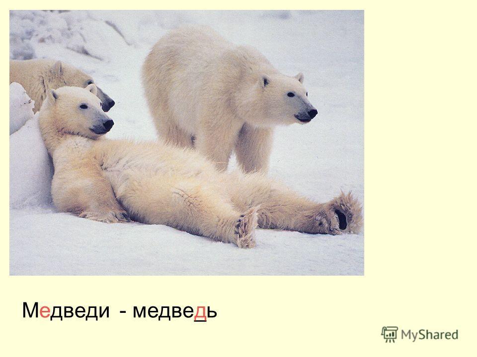 Медведи- медве_ьд