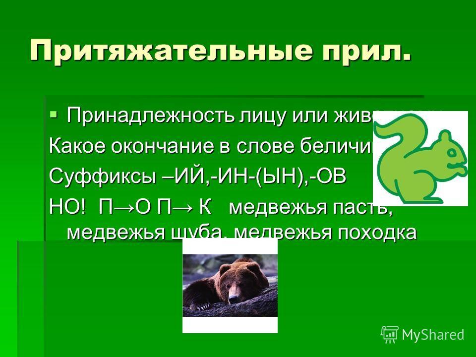 Притяжательные прил. Принадлежность лицу или животному Принадлежность лицу или животному Какое окончание в слове беличий.? Суффиксы –ИЙ,-ИН-(ЫН),-ОВ НО! ПО П К медвежья пасть, медвежья шуба, медвежья походка