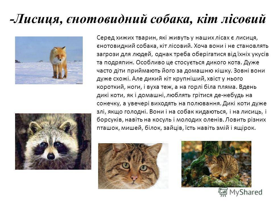 Серед хижих тварин, які живуть у наших лісах є лисица, єнотовидний собака, кіт лісовий. Хоча вони і не становлять загрози для людей, однак треба оберігатися від їхніх укусів та подряпин. Особливо це стосується дикого кота. Дуже часто діти приймають й
