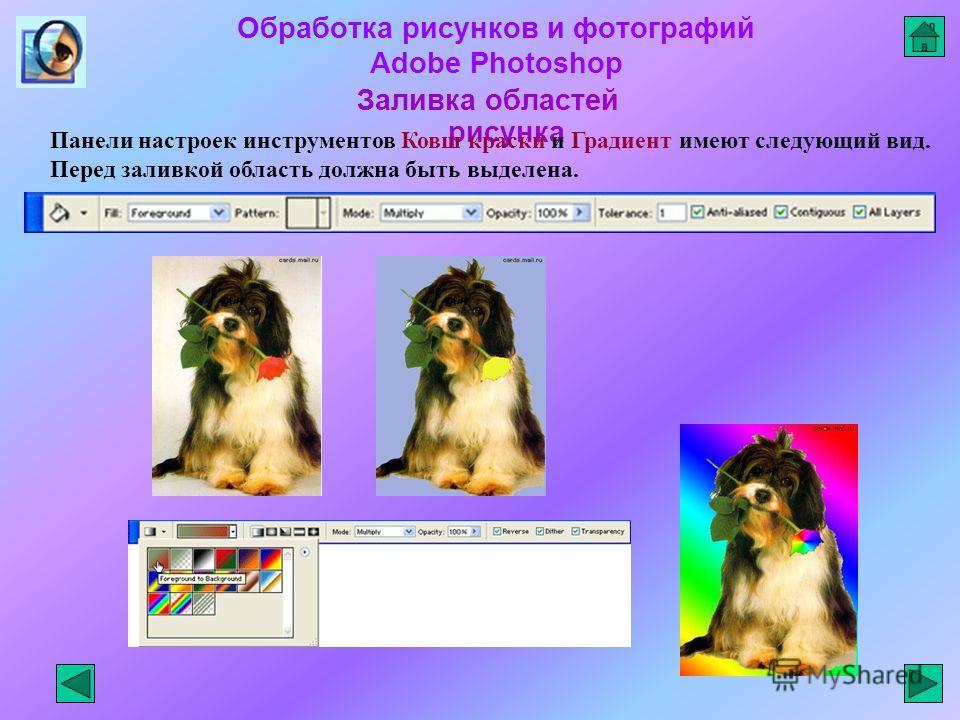 Обработка рисунков и фотографий Adobe Photoshop Заливка областей рисунка Панели настроек инструментов Ковш краски и Градиент имеют следующий вид. Перед заливкой область должна быть выделена.